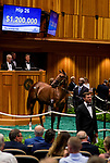 SARATOGA SPRINGS, NY- AUGUST 06: Hip #26 by American Pharoah, out of Life At Ten, a filly bred in Ontario and consigned by Gainesway Agent Vi sells for $1.2 million on Day 1 of the Fasig Tipton Saratoga Select Yearling Sale at the Humphrey S. Finney Sales Pavilion on August 6, 2018 in Saratoga Springs, New York. (Photo by Alex Evers/Eclipse Sportswire)