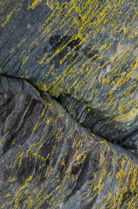Rock Face with Lichens, Holbrook Island Sanctuary, Brooksville, Maine, US