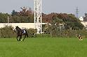 Horse Racing: Tenno Sho Autumn 2018