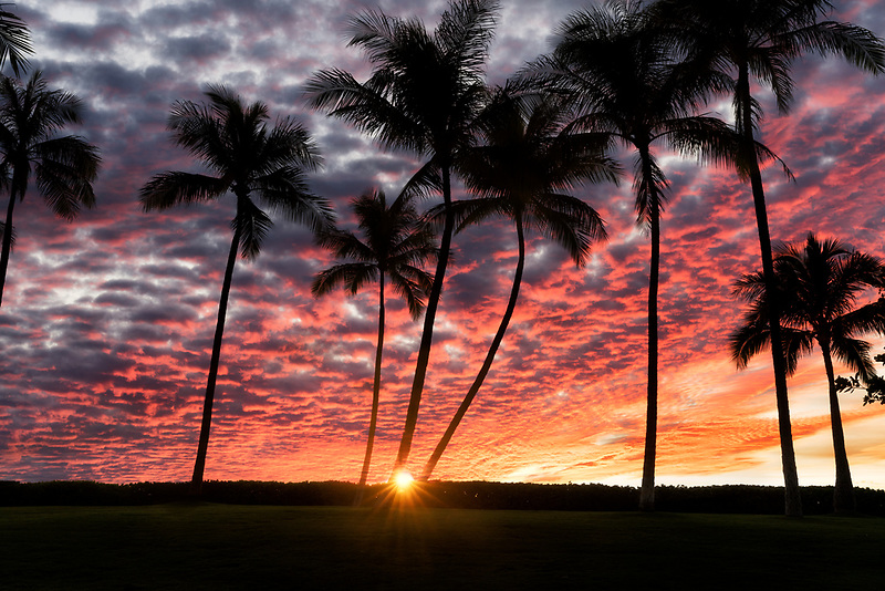 Sunset with palm trees  at Ko Olina, Oahu, Hawaii