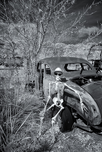 Skeleton takes a lazy break in a junkyard sitting on a ruined 1939 Plymouth coupe car, black and white infrared photograph.