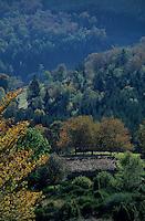Europe/France/Rhône-Alpes/42/Loire/Massif du Forez : Montagne de Garnier, la Jasserie de Garnier et ferme
