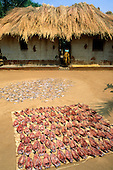 Kasanga, Tanzania. Dagaa (Atherinomorus lacunosus)  and other lake freshwater fish laid out to dry in the sun; Lake Tanganyika.