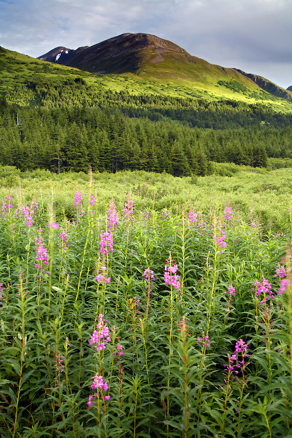 Turnagain Pass, Chugach National Forest, Alaska.