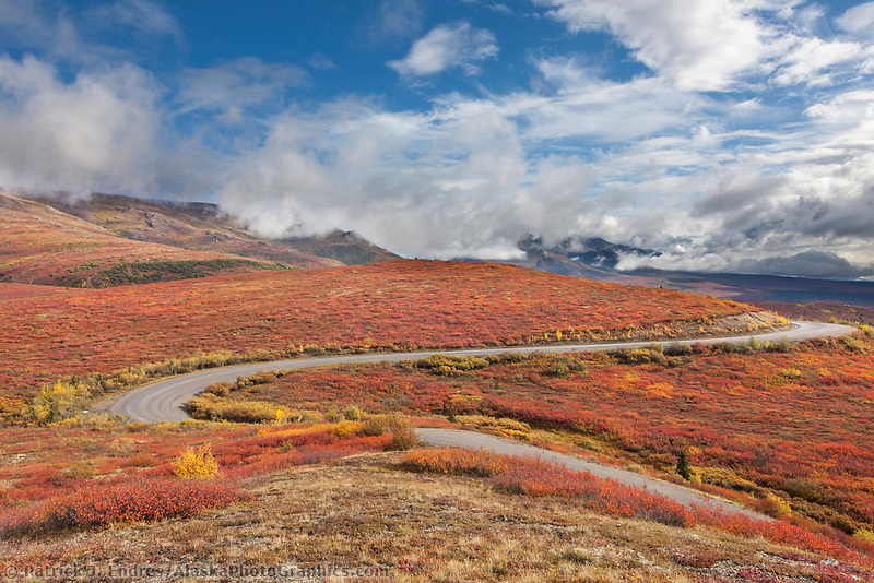 Denali park road winds through the crimson tundra of Denali National Park.