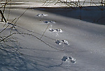 FOOTPRINTS IN THE SNOW over a frozen stream