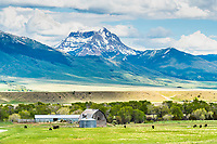 Beautiful Montana  Ranch in the Madison River Valley