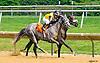 Ring Knocker winning at Delaware Park on 6/30/16