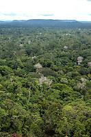 Área de manejo florestal em área conhecida como Bituba, explorado pelo grupo Orsa.<br />Almeirim, Pará, Brasil.<br />Foto Paulo Santos/Interfoto<br />03/2005.