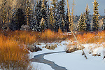 A stream meanders through willows in Grand Teton National Park, Wyoming.