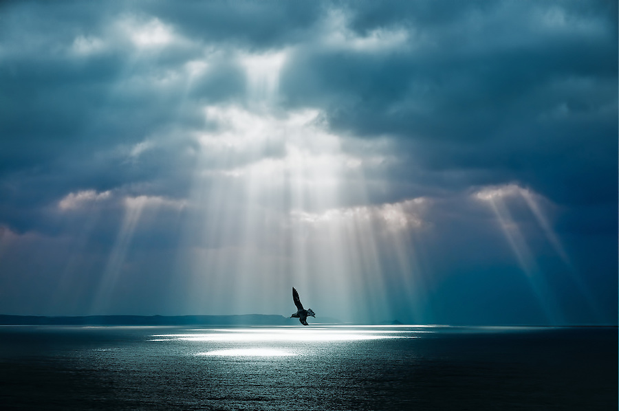 Crepuscular rays, more attractively known as 'godbeams', are relatively common on the North Cornwall coast. Low cloud sweeps in on the prevailing westerly winds and late in the day as the sun lowers in the west it can sometimes break through gaps in the cloud to light the surface of the sea. This shot of a soaring gull backed by the rays was taken from the battlements of the mainland section of Tintagel Castle (legendary birthplace of King Arthur), looking south west towards Pentire Point, a place where I have witnessed this phenomenon on a few occasions.