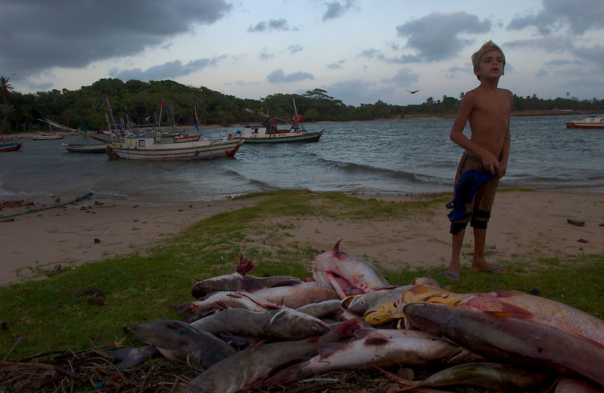 A local boy watches fishermen unload their day's catch on the island of Marajo (acute accent on the final o). The size of Switzerland, Marajo is a vast expanse of wilderness and cattle and water buffalo ranches, offering a close look at rural life in equatorial Brazil. (Kevin Moloney for the New York Times)