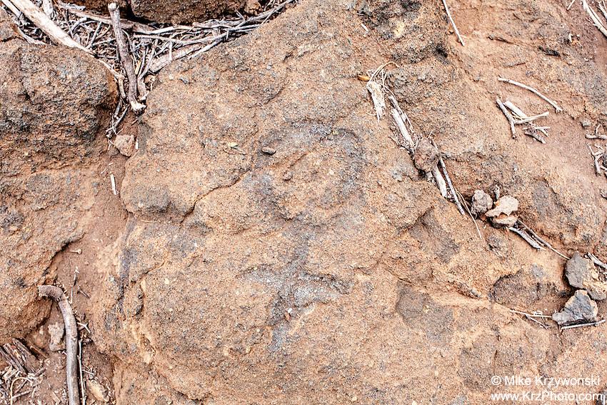 Hawaiian petroglyph at Puako Petroglyph Park, Big Island, Hawaii