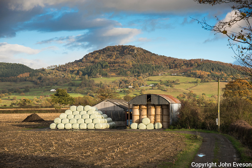 Barn with big bales of silage and straw, Welshpool, Powys, Wales.