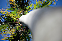 Trunk Bay Palm Trees.Virgin Islands National Park.St John, USVI