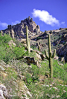 Saguaro Cactus at Sabino Canyon, Arizona