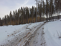 FOREST_LOCATION_90045
