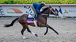 January 23, 2020: Zulu Alpha gallops on the main track as horses prepare for the Pegasus World Cup Invitational at Gulfstream Park Race Track in Hallandale Beach, Florida. John Voorhees/Eclipse Sportswire/CSM