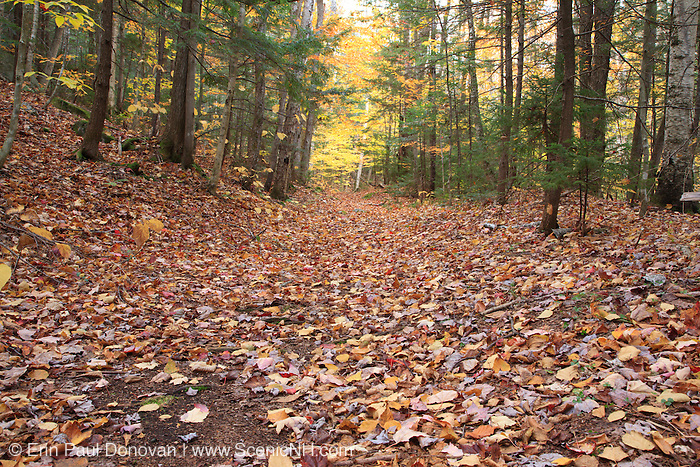 Bolles Trail in Albany, New Hampshire USA during the autumn months