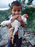 December 15th, 2004-Matahui, Timor-Leste- A young boy cradles his sleeping pet chicken near the small village of Matahui in Viqueque District. Photograph by Daniel J. Groshong/Tayo Photo Group