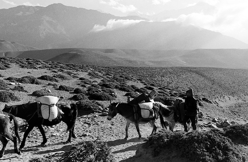 A man guides a donkey train in the upper reaches of the Kali Gandaki valley, Nepal, 2008. Photo: Ed Giles.