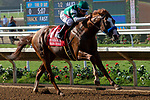 "DEL MAR, CA  AUGUST 25:   #1 Catalina Cruiser, ridden by Drayden Van Dyke, in the stretch of the Pat O'Brien Stakes (Grade ll), Breeders' Cup ""Win and You're In Dirt Mile Division"" on August 25, 2018 at Del Mar Thoroughbred Club in Del Mar, CA.(Photo by Casey Phillips/Eclipse Sportswire/Getty ImagesGetty Images"