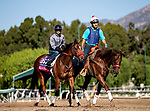 OCT 28: Breeders' Cup Juvenile Fillies Turf entrant Applecross, trained by Richard Baltas, at Santa Anita Park in Arcadia, California on Oct 28, 2019. Evers/Eclipse Sportswire/Breeders' Cup