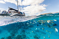 A catamaran anchored off the leeward coast of O'ahu, with tropical fish swimming nearby.