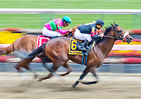 BALTIMORE, MD - MAY 19: Shaman Ghost #6, ridden by Javier Castellano, wins the Pimlico Special on Black-Eyed Susan Day at Pimlico Race Course on May 19, 2017 in Baltimore, Maryland.(Photo by Scott Serio/Eclipse Sportswire/Getty Images)