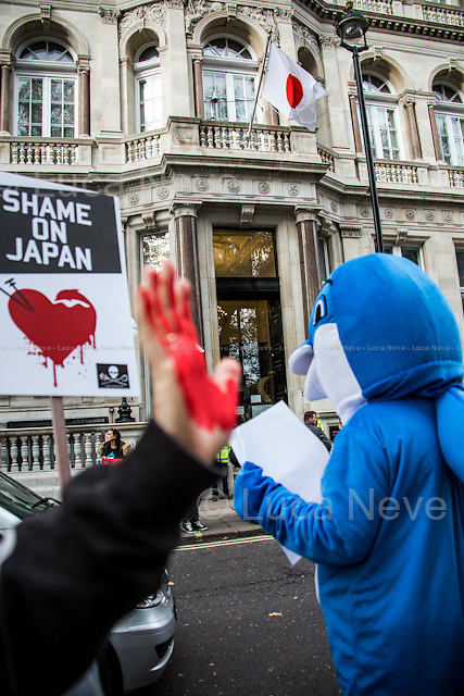 "London, 07/11/2014. Today, campaigners from ""London Against the Dolphin Massacre"" - supported by ""Taiji Dolphins Team UK"", ""Care for the Wild International"", ""Sea Shepherd"" and ""Save Japan Dolphins"" - along with citizens, gathered outside the Japanese Embassy in Piccadilly to protest against the annual ""Taiji Cove Dolphin Drives"" in Japan. This practice sees the slaughter thousands of sea mammals, including dolphins and small whales, each year. Several hundred of the dolphins are captured to be sent to dolphinariums around the world."
