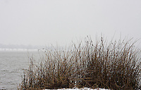 Reeds along the bank of White Rock Lake in Dallas, Texas during a rare winter snowfall in February 2010.