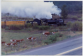 #478 returning to Durango with Silverton train.  Cattle are fleeing in the foreground.<br /> D&amp;RGW  Animas Valley,