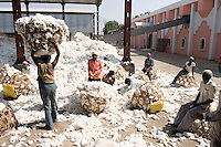 INDIA, Madhya Pradesh, Khargone, Mahima ginning factory, processing of fair trade and organic cotton, worker carry harvested cotton in baskets to the ginning machines / INDIEN Madhya Pradesh , Entkernung von fairtrade und Biobaumwolle bei Mahima Fibres Ltd.