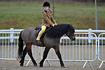 Ring 2. BSPS area 15 winter qualifying show. Brook Farm Training Centre. Essex. UK. 03/03/2019. ~ MANDATORY Credit Garry Bowden/Sportinpictures - NO UNAUTHORISED USE - 07837 394578