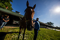LOUISVILLE, KY - MAY 02: Irap comes over to check out the photographers at Churchill Downs on May 02, 2017 in Louisville, Kentucky. (Photo by Alex Evers/Eclipse Sportswire/Getty Images)
