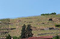 vineyard condrieu rhone france
