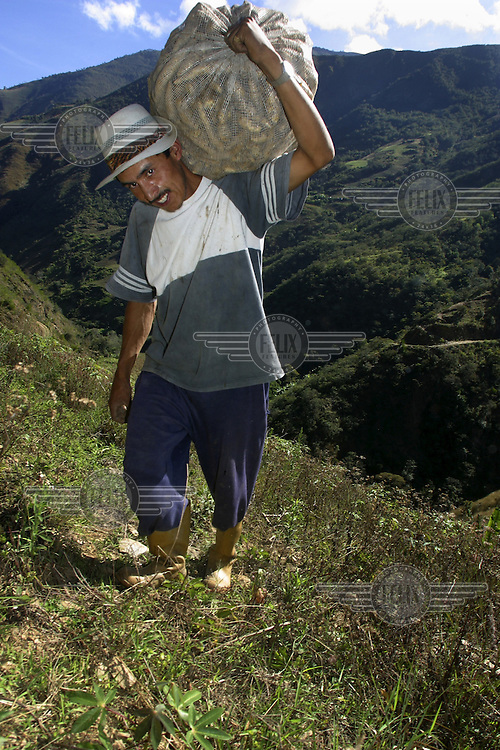 A farmer carries produce up a steep slope in the Andean mountains.
