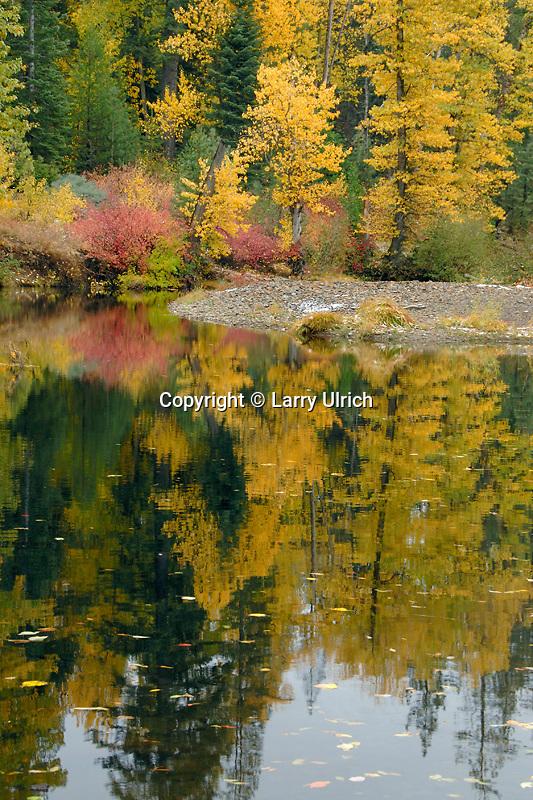 Red osier dogwood and black cottonwood<br />   line the South Fork Yuba River<br /> Cisco Grove Gould Park<br /> Sierra Nevada, California