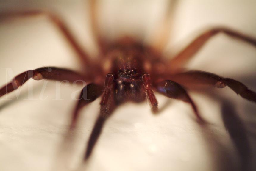 A closeup of a spider.