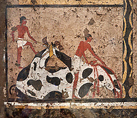 Ancient Egyptian wall paintings of the Tomb of Iti and Neferu, Ritual slaughter scene Scene, Thebes, First Intermediate Period (2118 – 1980BC). Egyptian Museum, Turin. Schiapelli excavations cat 1434.<br /> <br /> The ritual slaughter scene depicts an ox being held down with blodd being collected in a bowl. These tempera paintings were on a crude mud and straw plaster and were of typical Old Kingdom tombs showing ritual offering scenes. The tomb was partly cut into rock with mud brick walls and vaults. The facade of the tomb had 16 columns looking over a courtyard sloping towards the valley.