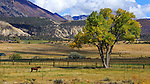 A horse farm in Colorado near the Black Canyon of the Gunnison Narional Park, USA