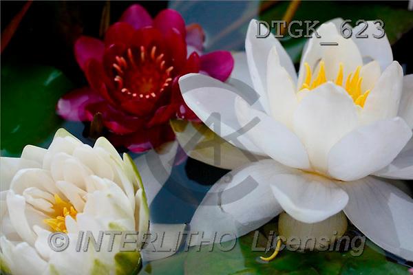 Gisela, FLOWERS, photos(DTGK623,#F#) Blumen, flores, retrato