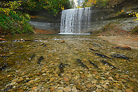 Salmon spawning. Kagawong River at Bridal Veil Falls in Kagawong. <br /> Manitoulin Island<br /> Ontario<br /> Canada