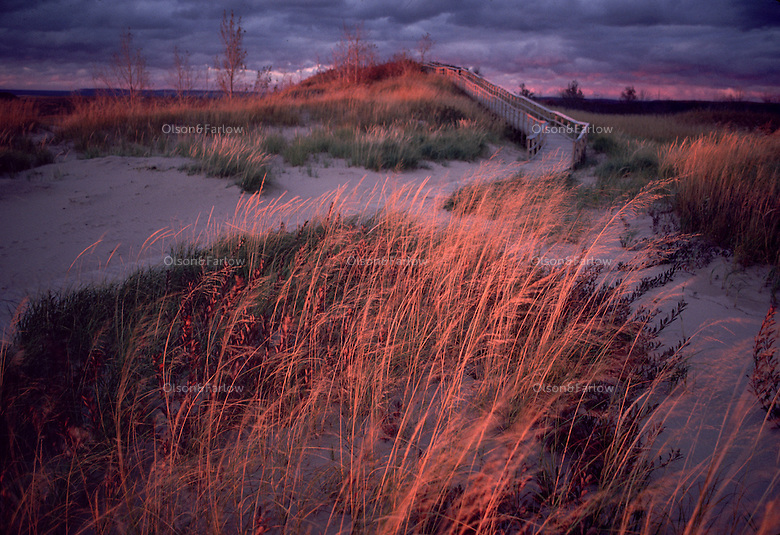 Sand dunes and fragile dune grasses glow from dramatic, late afternoon light before a storm hits Sleeping Bear Dune National Lakeshore.  Established in 1970, the park encompasses 60 km of Lake Michigan's eastern coastline and North and South Manitou Islands. Visitors to Sleeping Bear will enjoy exploring sand dunes, beaches and forests.