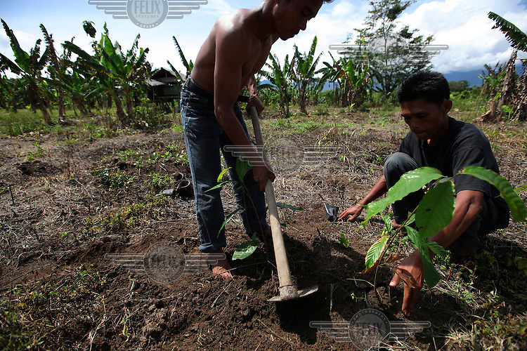 The Forsaka Nursery, in Jalin village, is a new pilot initiative set up by Fauna and Flora International (FFI) which will benefit over 300 families in six villages in the area. The nursery is growing seedlings for cocoa plants, Mahoni  trees (used for timber) and other trees in order to provide free seedlings to local farmers to enable them to diversify their crops. The project employs 40 men from the local community who work at the nursery and some of the 300 farmers are already in discussions on how to set up a co-operative to sell their produce once they have planted their new crops.