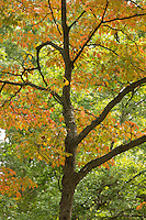 autumn colors at Arnold Arboretum, Boston, MA