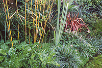 Golden bamboo in mixed border; Roger Raiche Berkeley Maybeck Cottage garden