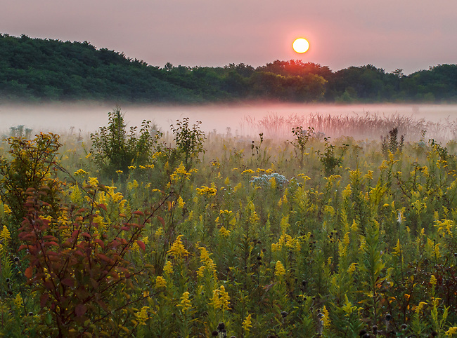 Sunrise light turns morning mist pink at Spriingbrook Prairie Forest Preserve in DuPage County, Illinois