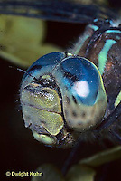 1O06-015z  Dragonfly - adult, head and compound eyes