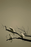 Image Ref: A005<br /> Location: Kinglake<br /> Date of Shot: 4th June 2013